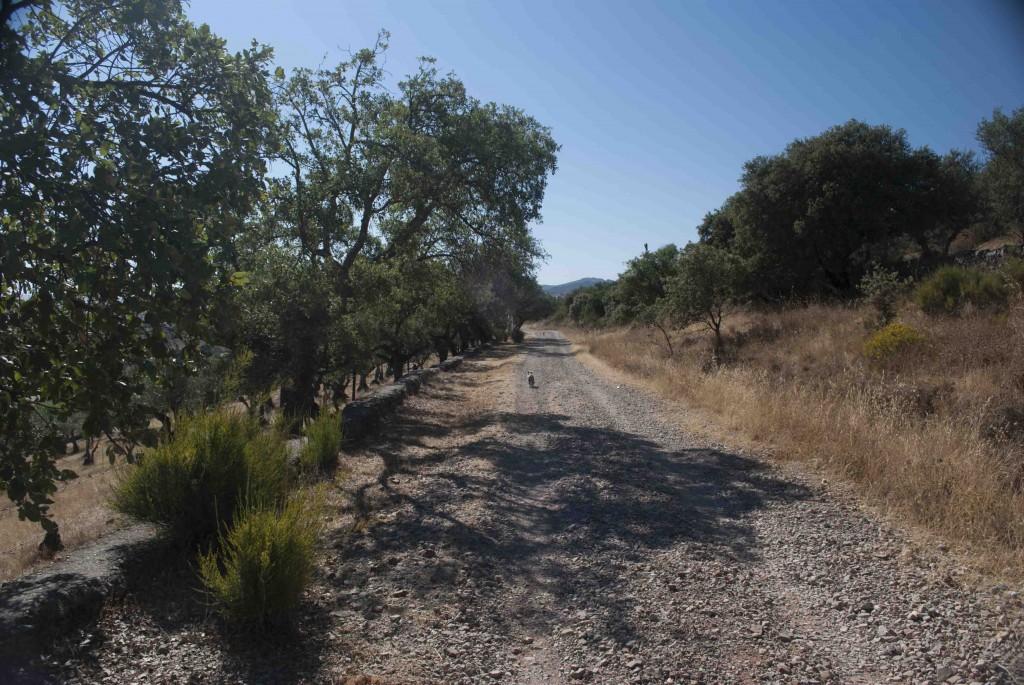 Desde Camping Cáceres, una ruta para todos los públicos